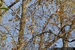 Kouzlo podzimu_25